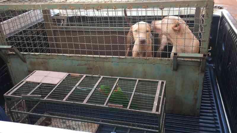 PM de Meio Ambiente resgata cães e aves em situação de maus-tratos em Capinópolis, MG