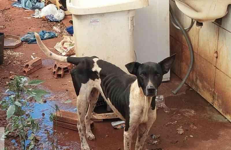 Cão com sinais de maus-tratos é encontrado em residência em Ituiutaba, MG