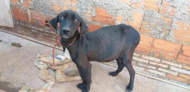 Tutor é autuado por maus-tratos a cachorro e posse ilegal de ave silvestre em Ituiutaba, MG