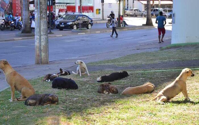 Prefeitura de Montes Claros (MG) compra equipamentos para castração de animais de rua