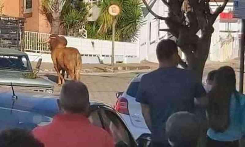 Grupo aciona Ministério Público sobre morte de boi no Sul de Minas