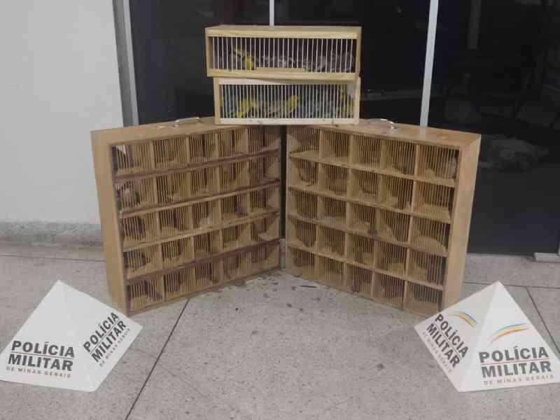 Dupla recebe multa de mais de R$ 300 mil por transportar pássaros em porta-malas em Perdões, MG