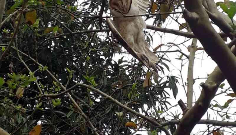 Mais um animal resgatado enroscado em linha de pipa