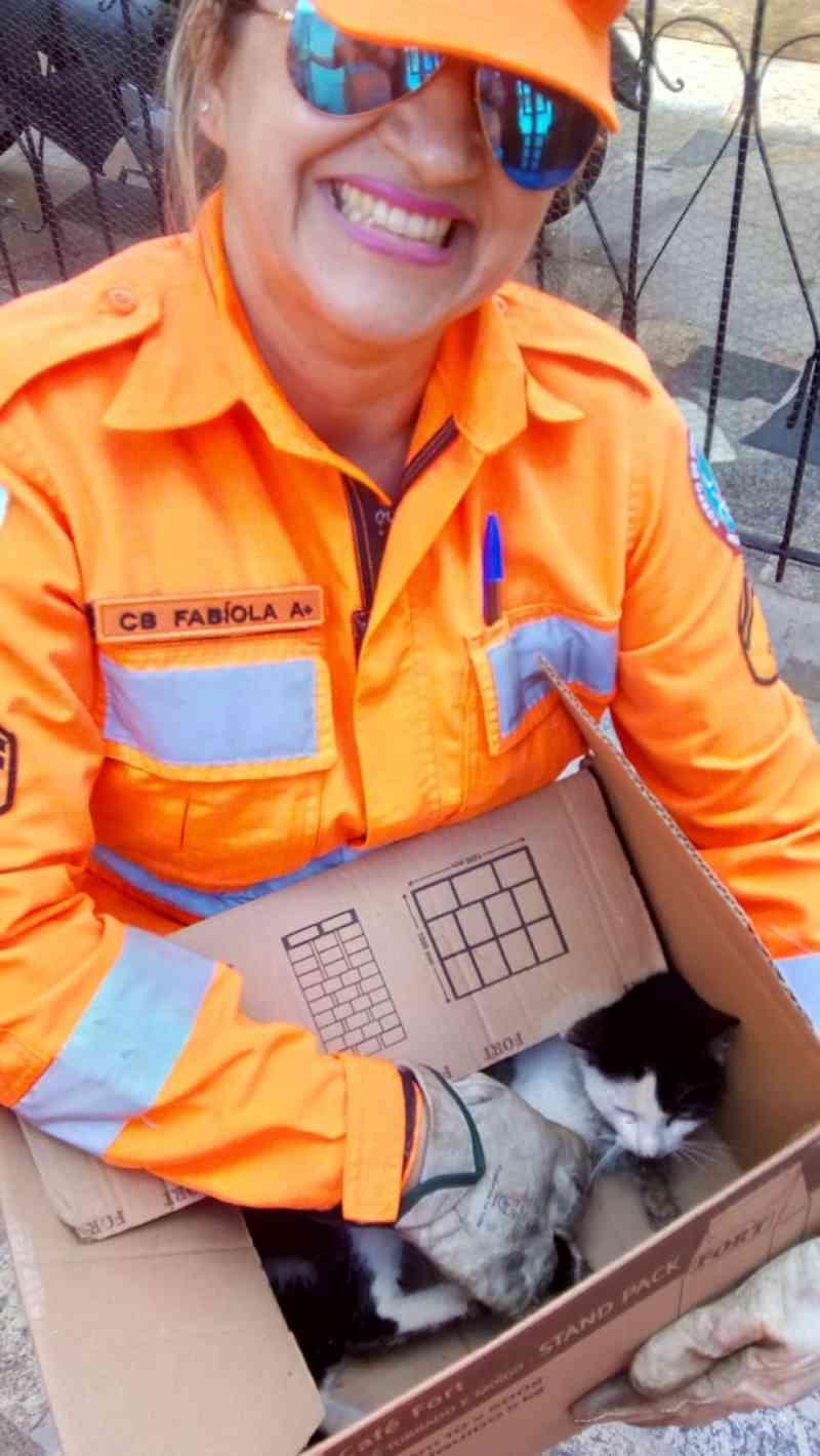 Bombeiros resgatam gato preso entre muro e parede de casa; animal foi adotado por militar