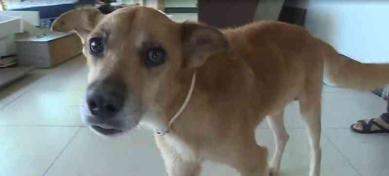 Dona de abrigo na Grande BH denuncia envenenamento em cães, mas é presa por maus-tratos