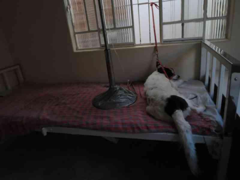 Em MG, dono de clínica é investigado por atuar como falso veterinário: 'Animais morreram por causa de cirurgias mal feitas'