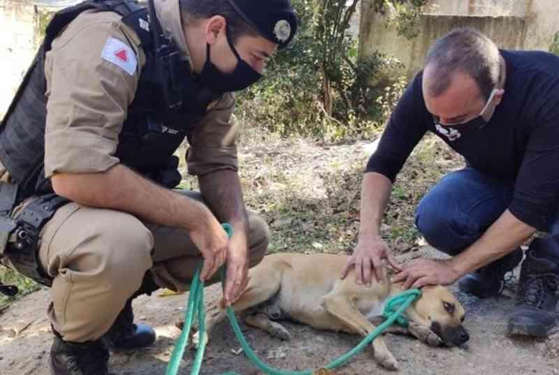 Polícia recolhe animais que seriam vítimas de maus-tratos na casa de suspeito de decepar patas do pit bull Sansão