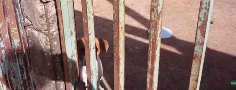 Vídeo: tutores viajam e deixam cachorro sem água e comida em Campo Grande (MS), denuncia vizinho
