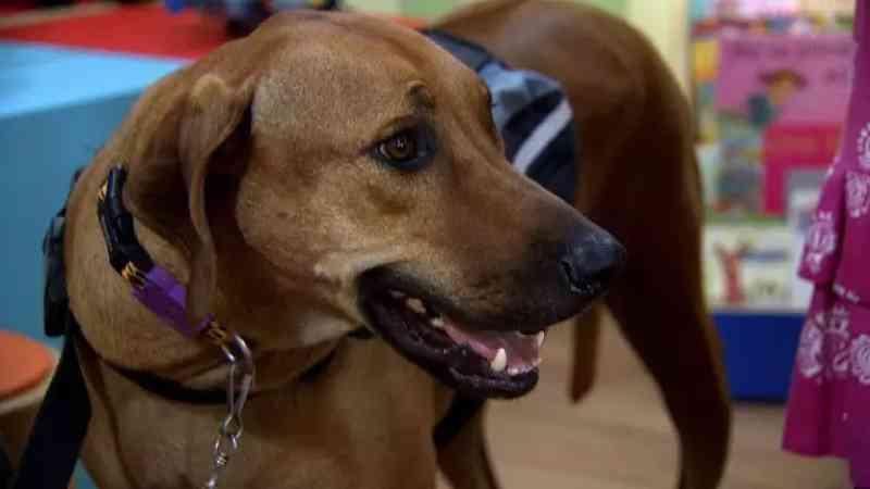 Prefeitura de Campo Grande (MS) quer medidas mais rígidas para venda e doação de animais