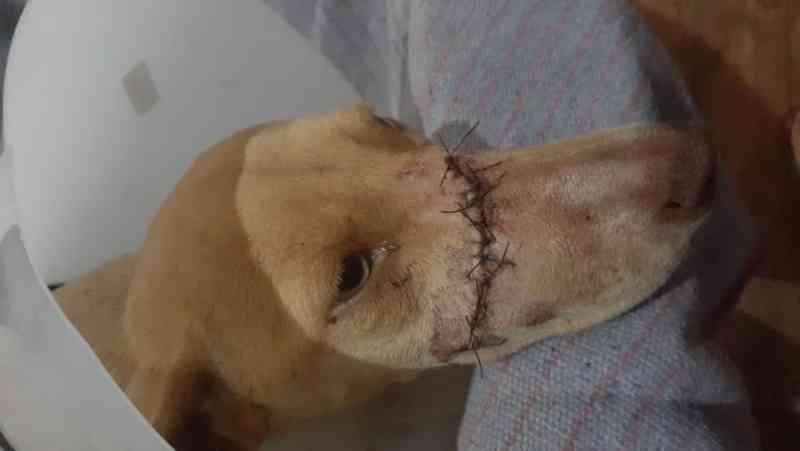 Homem golpeia animal com facão e Polícia Civil investiga o caso, em Ivinhema, MS