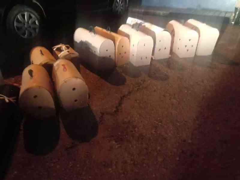 Motorista de aplicativo é flagrado com 'galos de rinha' rumo à Bolívia