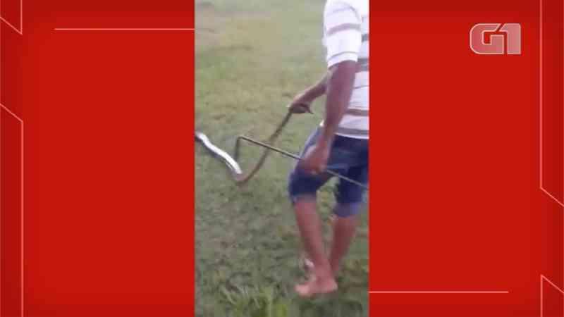 Vídeo mostra homem que persegue e arrasta sucuri de 4 metros em parque de MS