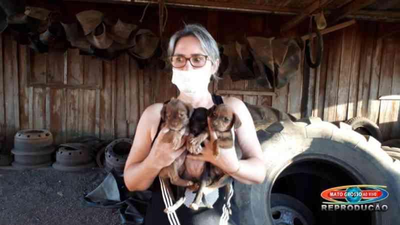 ONG resgata filhotes que estavam em condições de maus-tratos no pátio da Secretaria de Obras de Alta Floresta, MT