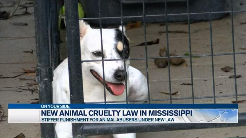 EUA: Mississippi reprime a crueldade animal com nova lei