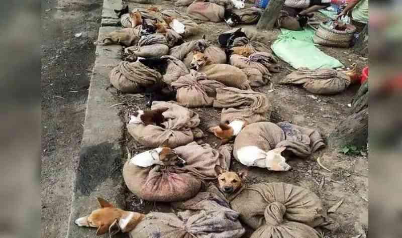 Índia: dias após o tumulto, Nagaland proíbe importação, venda e consumo de carne de cachorro