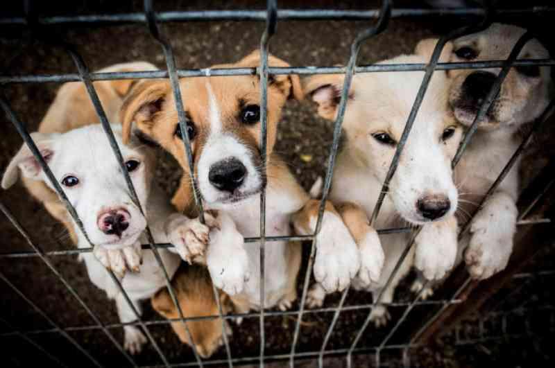 Portugal: PAN consegue avanço na criminalização dos maus-tratos a animais