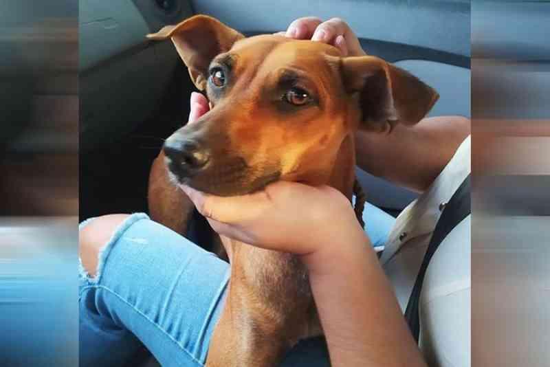 Homem é preso suspeito de estuprar cadela em Cacimba de Areia (PB); ONG é acionada para socorrer o animal
