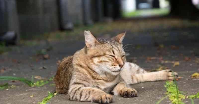 Moradora de Santa Cruz do Capibaribe (PE) é proibida de alimentar animais abandonados; Deputado aciona MPPE