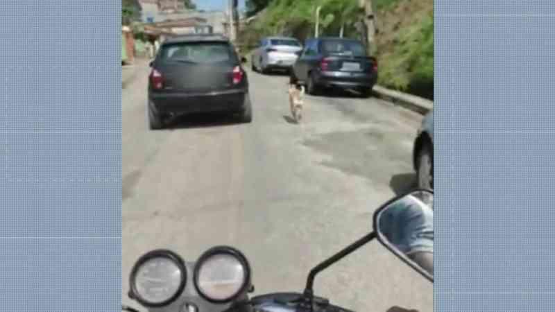 Vídeo mostra cachorro correndo atrás de carro e polícia investiga possível abandono em Recife