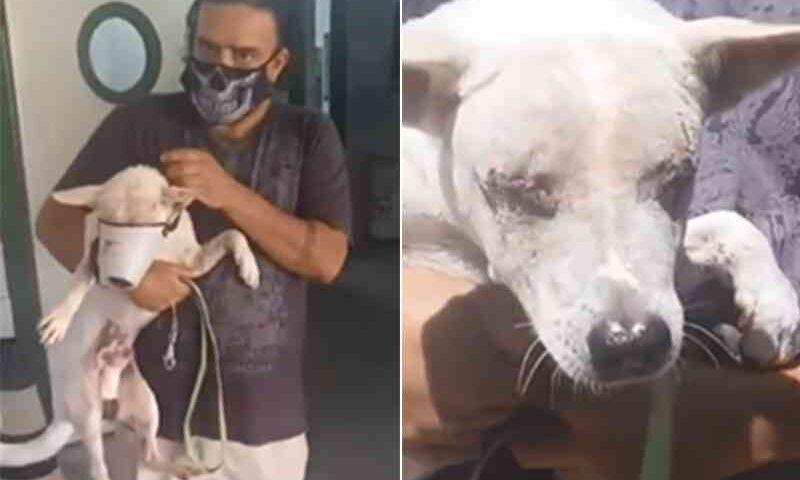 Cão que ficou cego tem alta e precisa de material para curativo e brinquedos