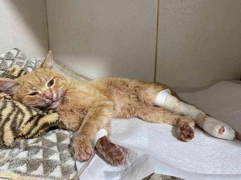 Gato é agredido e fica preso em varal de arame farpado, em Campo Mourão, PR