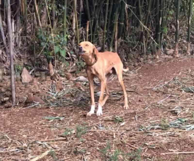Cachorro é resgatado em situação de maus-tratos em Francisco Beltrão, PR