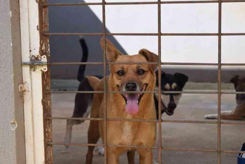 Canil Municipal de Guarapuava (PR) inicia campanha de adoção com aproximadamente 150 cachorros