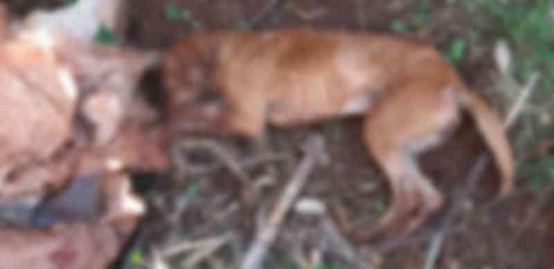 GM prende mulher após ela matar cachorro com barra de ferro em Londrina, PR