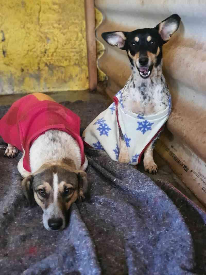 Cachorros são encontrados dentro de saco amarrado, em Maringá, PR; VÍDEO