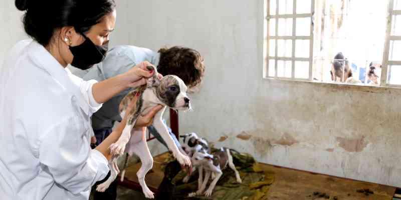 Morador de Maringá (PR) é multado em R$ 26 mil por maus-tratos a animais