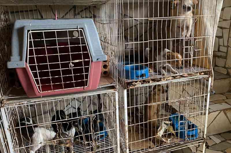 Polícia Civil do Paraná resgata cerca de 400 animais no primeiro semestre de 2020