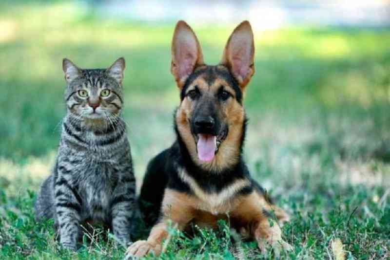 Lei de proteção e controle populacional de animais é sancionada em Santa Terezinha de Itaipu, PR
