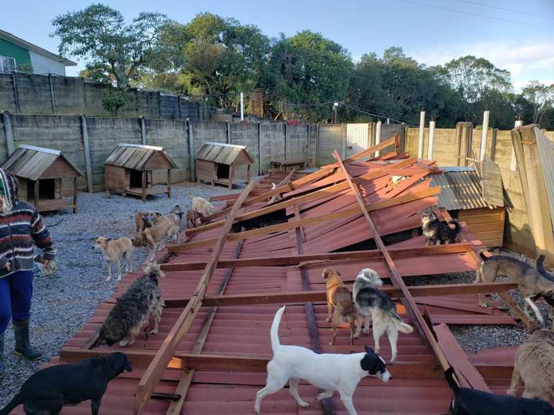 Ciclone bomba destrói telhado e muros de abrigo com cerca de mil cães em Campo Magro, PR