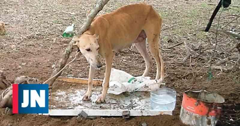 Mulher é levada ao tribunal por deixar cães do 'ex' passar fome e sede em Portugal