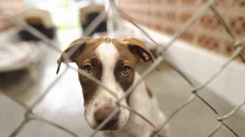 Centro de Recolha de Animais em Proença-a-Nova é gerido por 12 municípios de Portugal