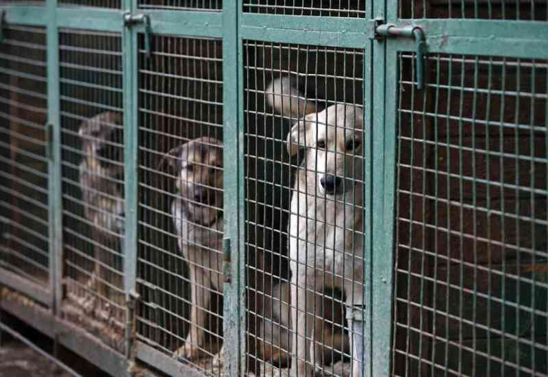 Vergonha! Associação de veterinários municipais defende regresso do abate de animais