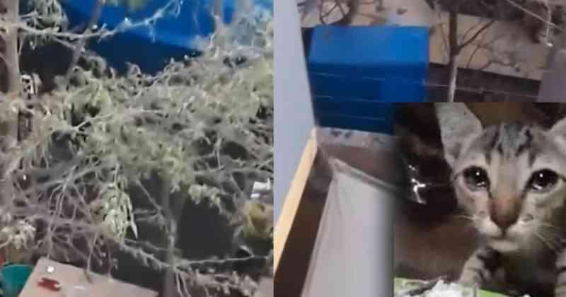 Família denunciada por criar gatos em gaiolas e depois comê-los
