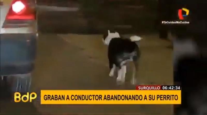 Homem abandonou o próprio cão em plena rua e o animal o perseguiu para que não o deixasse