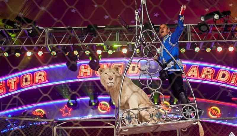 Ainda há 22 animais exóticos à guarda de empresários de circo em Portugal