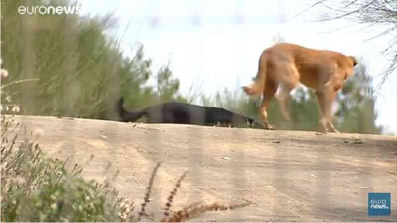 Caça aos abrigos ilegais para animais em Portugal