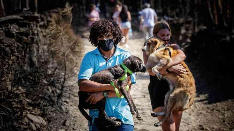 Mais de 50 animais morreram em incêndio em canil ilegal de Santo Tirso, Portugal; GNR impediu entrada para resgate