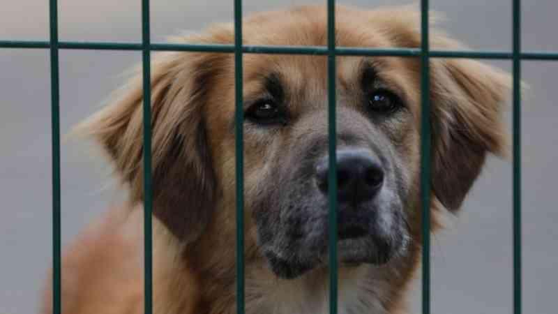 Especialista alerta que autoridades policiais portuguesas desconhecem lei para animais em risco de morte