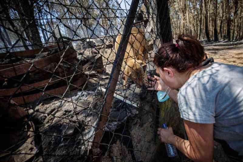 Portugal: Câmara de Santo Tirso confirma 54 animais mortos em incêndio