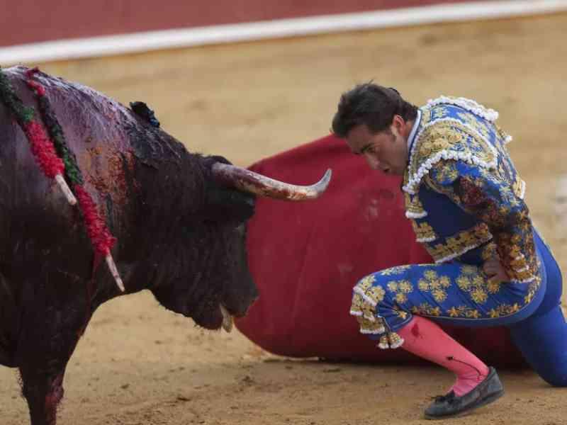 'A realização de touradas não deve fazer parte do novo normal'. Câmara de Lisboa defende fim do financiamento público à atividade