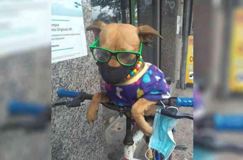Moradores denunciam maus-tratos a cadela em Bangu, RJ