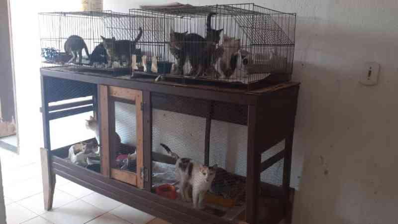 Abandono de animais na porta do canil municipal de Cabo Frio, RJ, cresce na quarentena