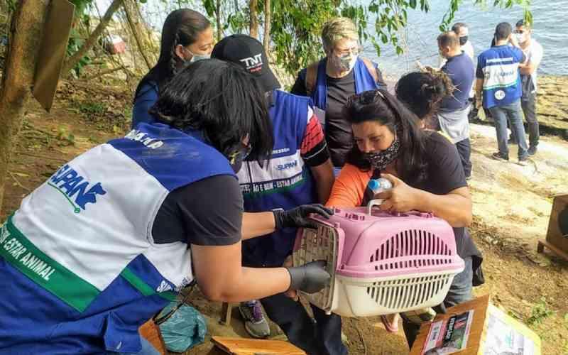 Subsecretaria de Proteção e Bem Estar Animal resgata gatinhos na Costa Verde do Rio