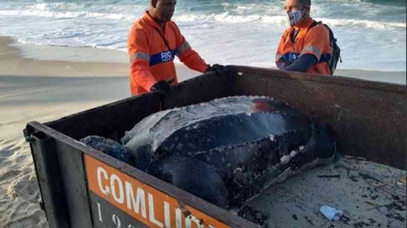 Tartaruga 'gigante' é encontrada morta em praia da Barra da Tijuca, zona oeste do Rio