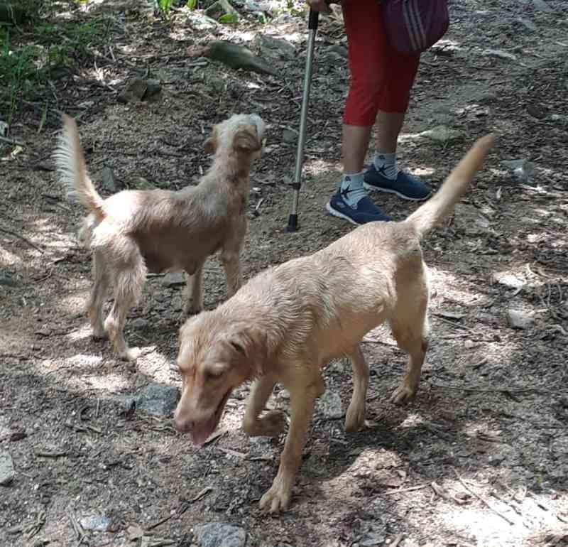 Agentes da prefeitura resgatam 4 cães vítimas de maus-tratos na Zona Oeste do Rio