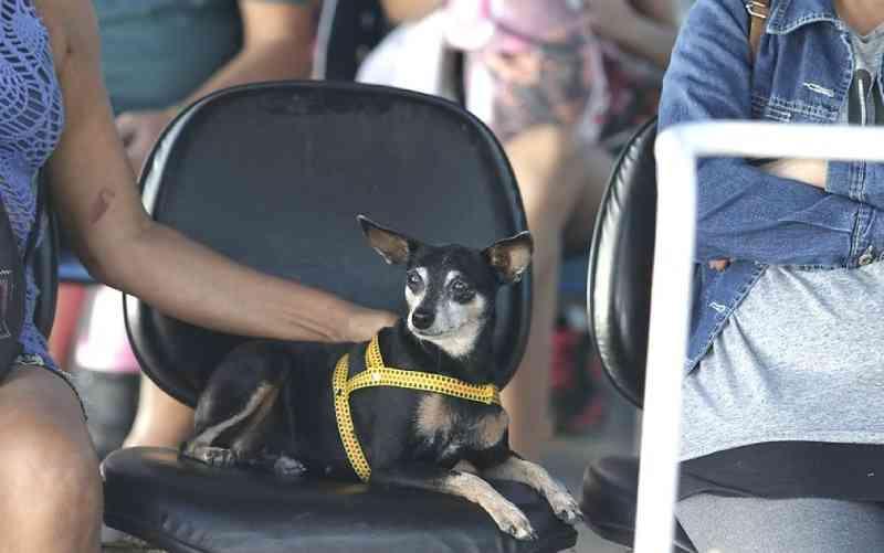 Câmara de Vereadores do Rio aprova projeto que determina distribuição de ração para animais abandonados